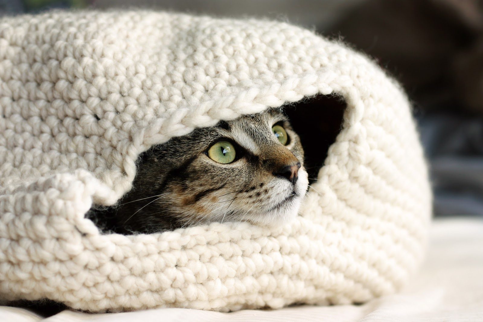 Crochet Cat Cave/Bed and Dog Sweater - YouTube | 1067x1600