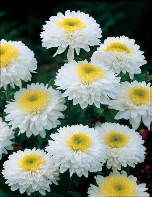 Nice Flower Tattoo Ideas For Women: LOVELY FLOWERS: Very Nice Wonderfull Flower High
