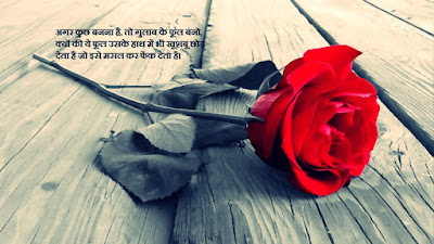 100 Happy Rose Day Status in Hindi | Rose Romantic Quotes Words
