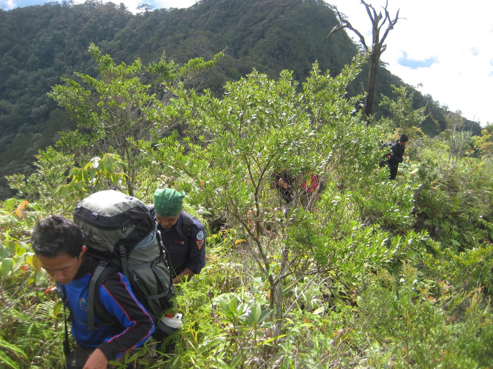 Hasil gambar untuk gambar jalur pos gunung pesagi