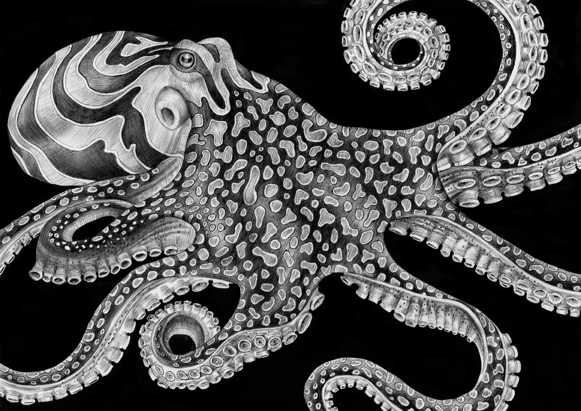 05-Octopus-Tim-Jeffs-All-Creatures-Great-and-Small-Ink-Drawings-www-designstack-co