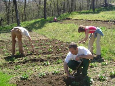 Cómo sembrar patatas