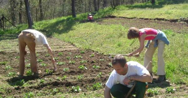 C mo plantar patatas construccion y manualidades hazlo for Como cultivar patatas