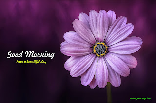 beautiful purple flower good morning image