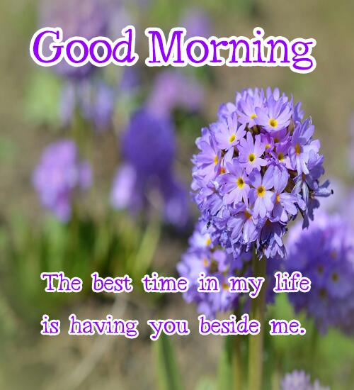 Good Morning Flowers With Quotes Wishes In 2018
