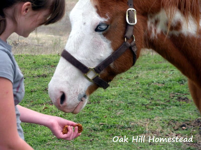 Your horses will love these easy-to-make molasses treats, made with just 4 ingredients.