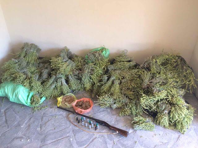 Σύλληψη τεσσάρων Αλβανών που έκοβαν παράνομα τσάι - Κατασχέθηκαν 56 κιλά (+ΦΩΤΟ)