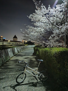 川沿いの夜桜2