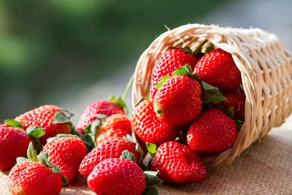 Benefits of Strawberry Fruit is Good for Body Health