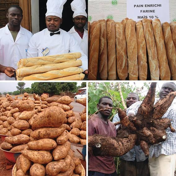 Cameroun : Du pain enrichi aux farines locales panifiables