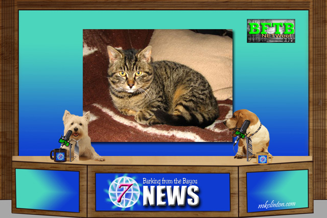 BFTB NETWoof News ~ Afghan cat survivor