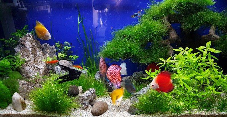 Kỹ thuật và những điều cần biết về nuôi cá cảnh cho người mới bắt đầu