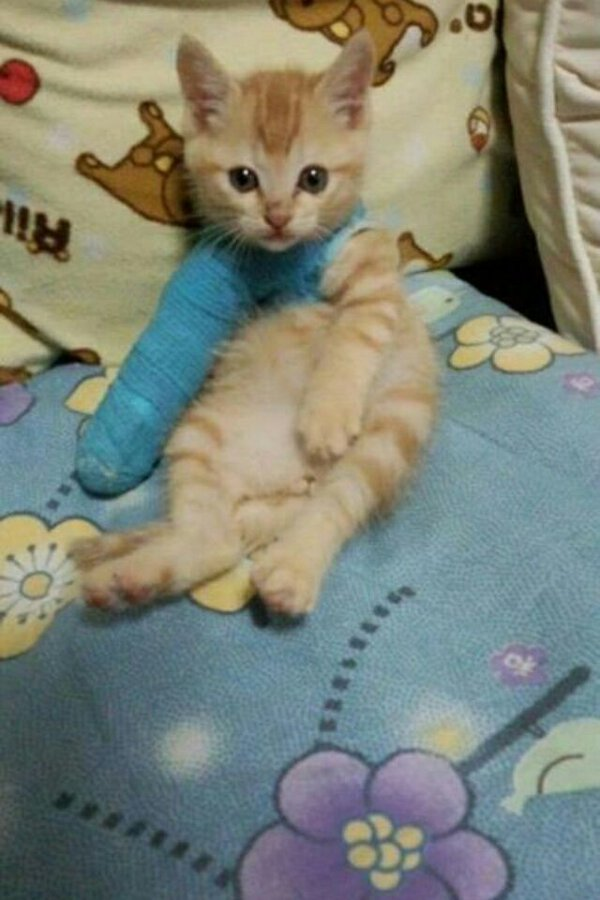 Funny cats - part 215, adorable cat pictures, funny cat photo, best funny cats