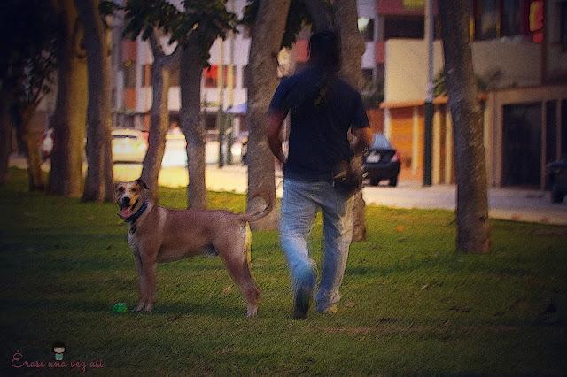 chico practico, historia de perros, cuentos de perros, relatos de perros, amigo fiel