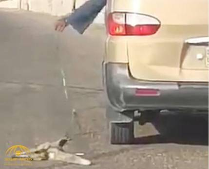 HEAVY FINE ON DRIVER FOR DRAGGING FOX AND ABUSING ANIMAL