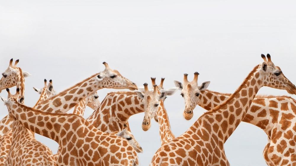Halsfalten: Woher sie kommen und was man wirklich dagegen tun kann