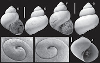http://sciencythoughts.blogspot.co.uk/2016/04/lacustrine-gastropods-from-late-miocene.html