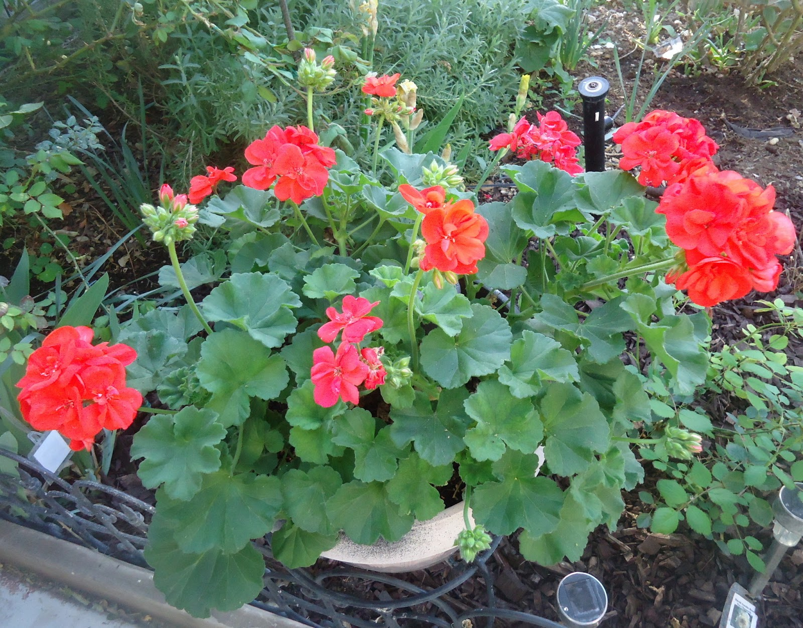 fall plants for the southwest cottage garden
