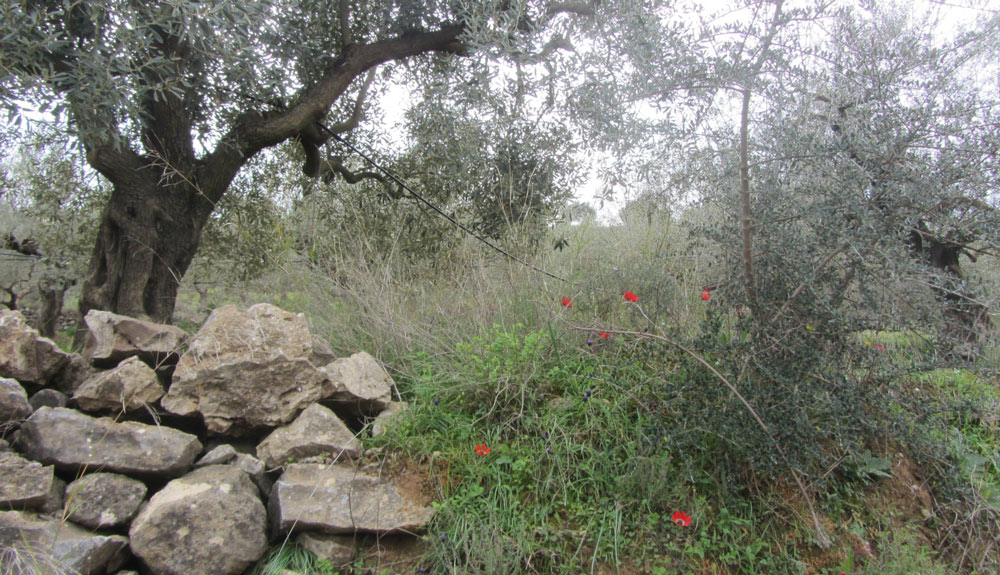 Biodiversitätsfläche