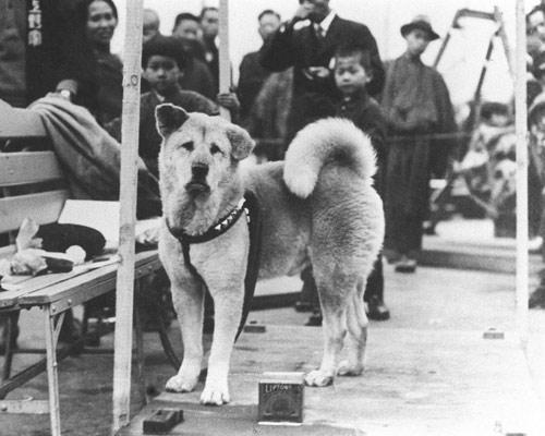 7 chú chó trung thành nhất thế giới