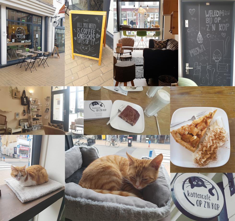 Katzenkaffee Groningen