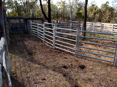 Improving Our Cattle Yards Eight Acres