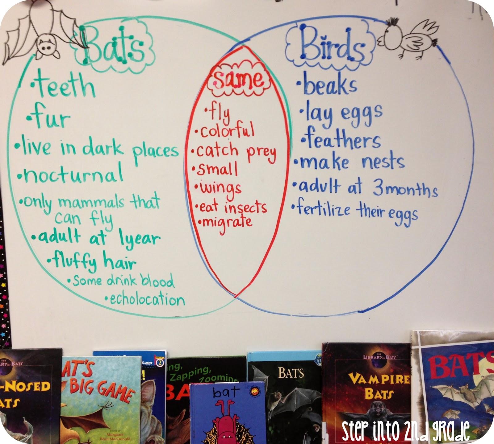 Step Into 2nd Grade With Mrs Lemons Bats Bats And More Bats