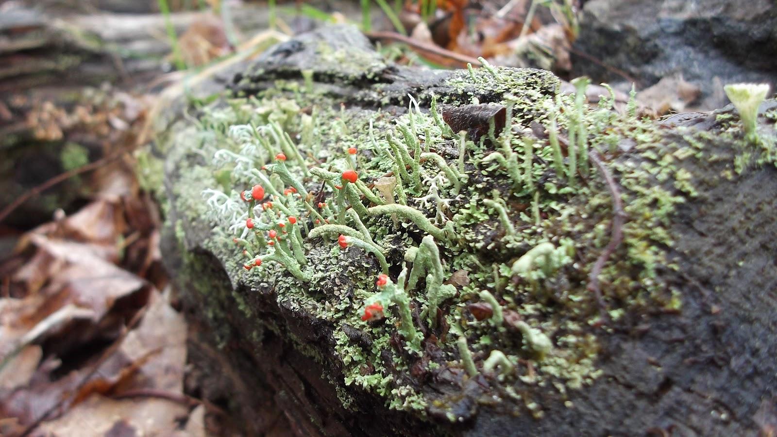 The Flatt Perspective: Lichen Art