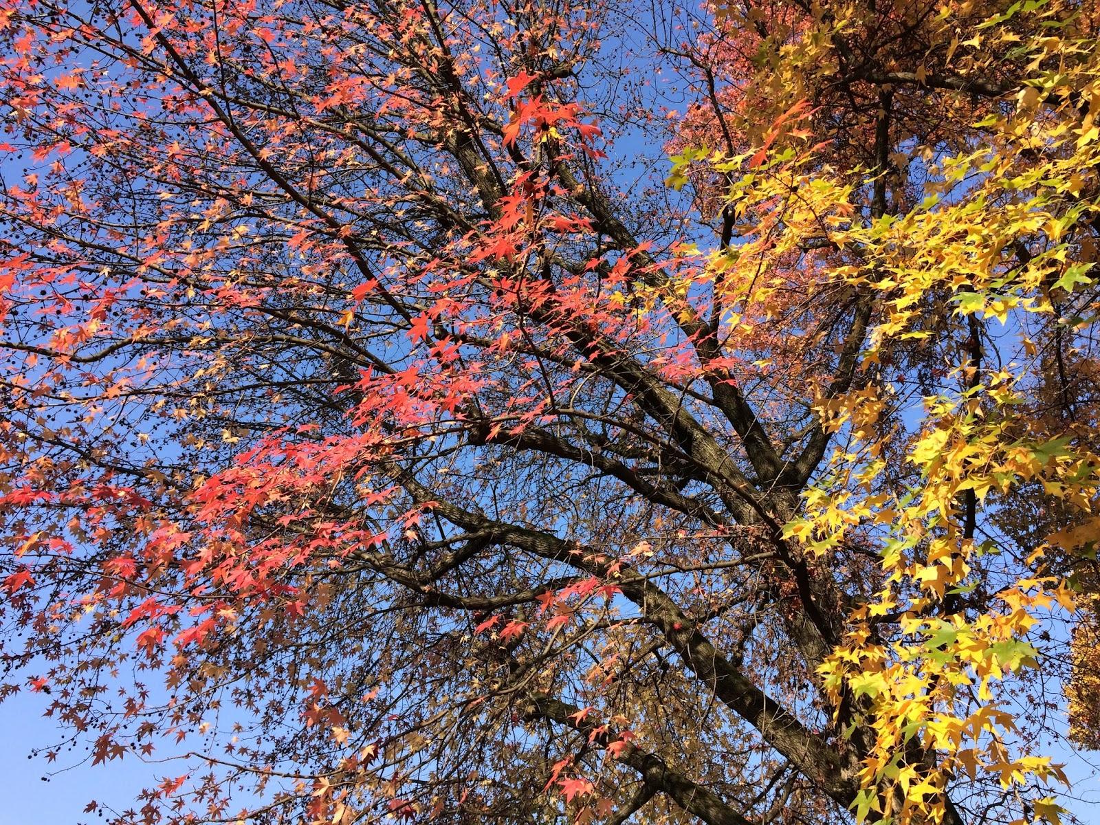 Risultati immagini per domani è la festa degli alberi? immagine?