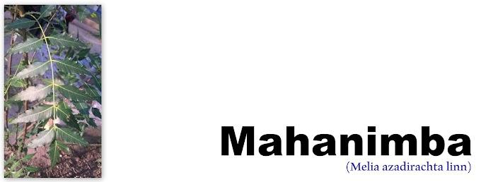 Mahanimba (Melia Azadirachta linn/Bead tree): Local Names, Chemical Compositions, Medicinal Uses