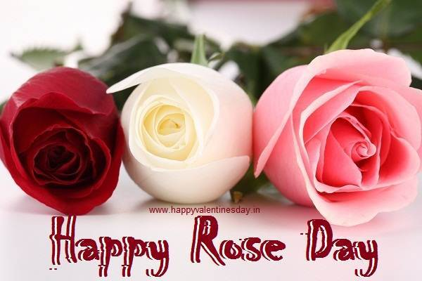 rose day images and shayri