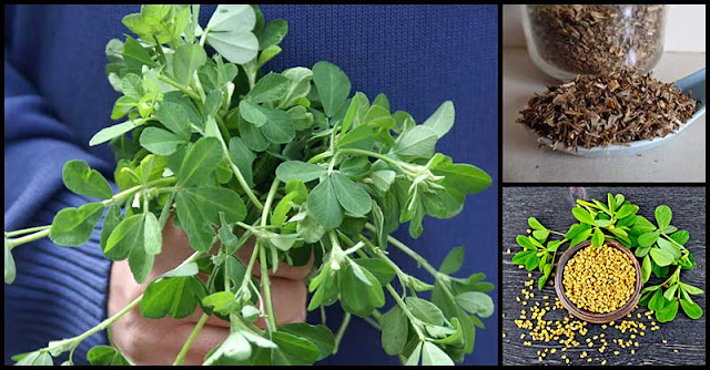 What Can We Get From Fenugreek Leaves?