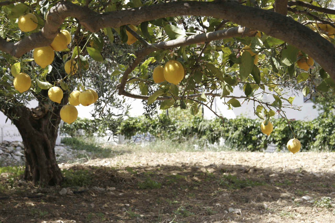 Blog de sociales 1 eso paisaje mediterr neo for Cultivo de arboles frutales en macetas