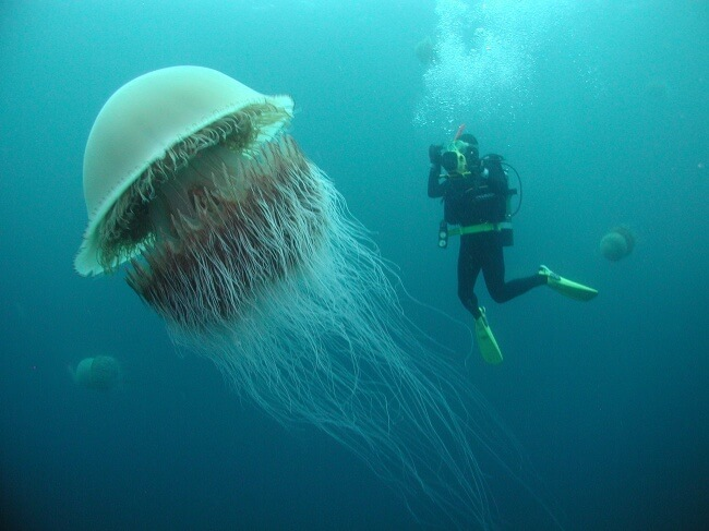 22 Breathtaking Images Of Things You've Never Seen Before - A human-sized jellyfish