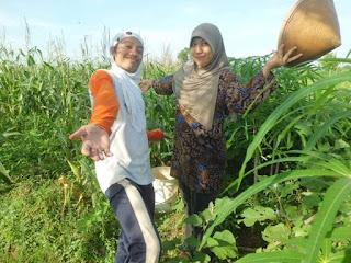 Berkebun Sebagai Gaya Hidup dan Berbahagia Makan Sayur dan Buah Hasil Tanam Sendiri