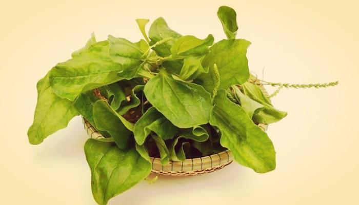 Plantas que se comen