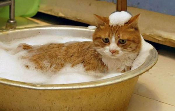 Remedies to Try for Cat Fleas