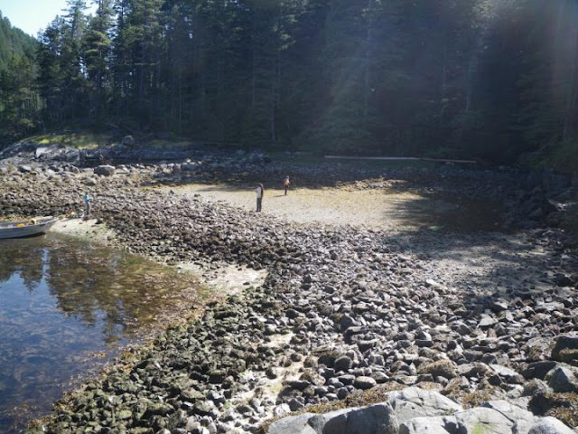 3,500 years of shellfish farming by indigenous peoples on North America's Northwest coast