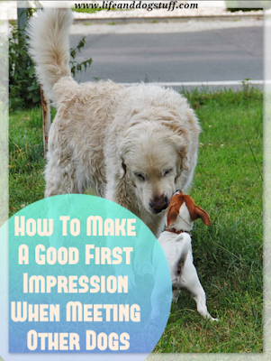 How To Make A Good First Impression When Meeting Other Dogs.