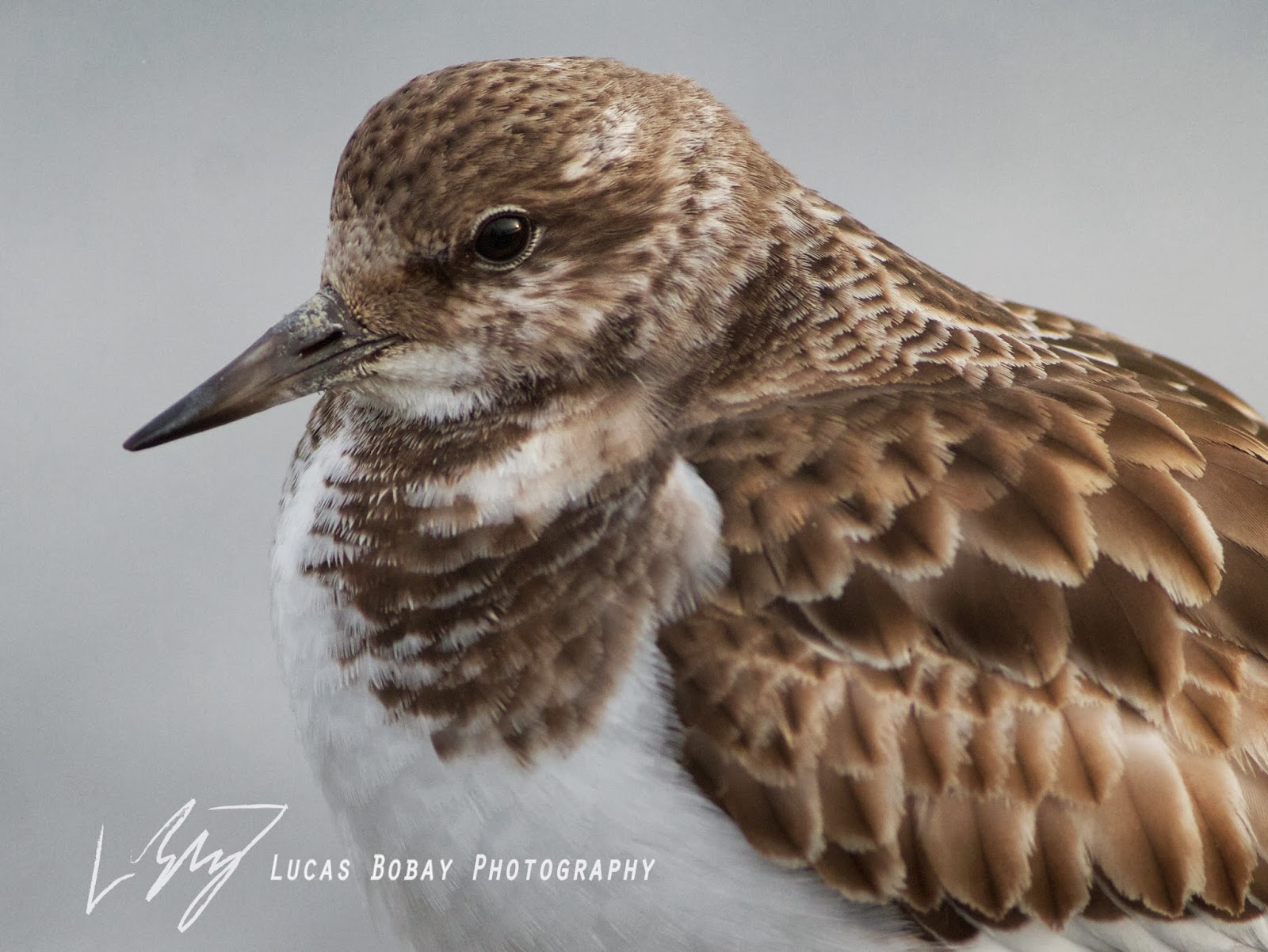 Young Birder Blog Birding #25