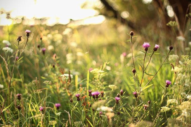 wild grass, Connemara