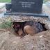 Todos pensaron que el perro estaba llorando la muerte de su amo, pero lo que encontraron detrás sorprendió a todo el mundo