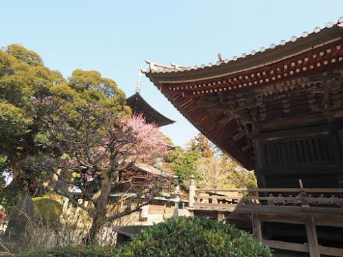 立派な三重塔と本堂