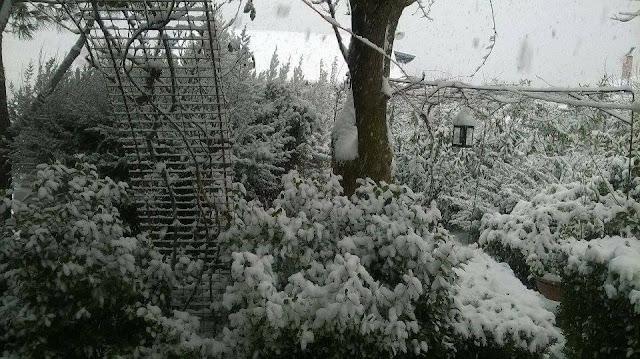 Πανέμορφο το χιονισμένο Καρτέρι Θεσπρωτίας (+ΦΩΤΟ)