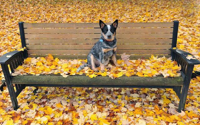 Hond op een bankje in het park met herfstbladeren op de grond