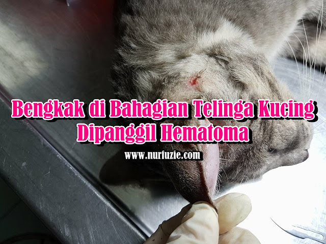 Bengkak di Bahagian Telinga Kucing Dipanggil Hematoma