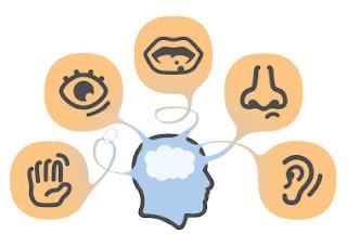 Brain Processing Senses