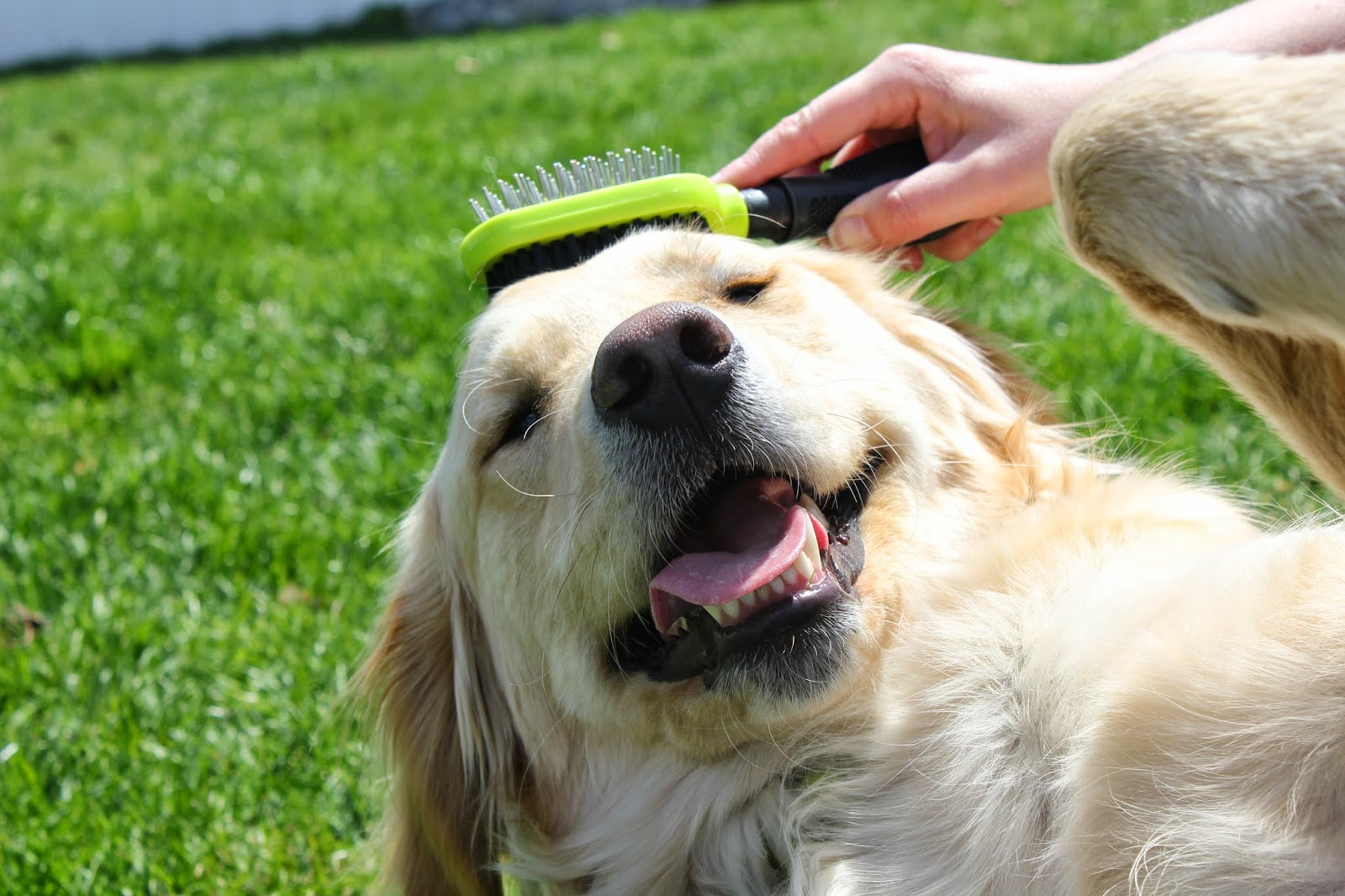keeping dogs well groomed with Furminator dual brush