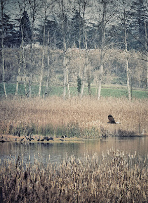 Arpella sobrevolant l'estany