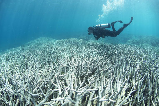 Global Warming Killing The Great Barrier Reef